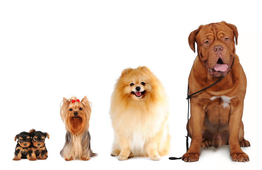 Group of dogs different sizes isolated